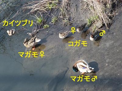140312mizutori1_name