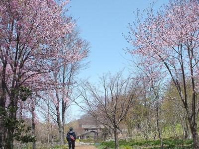 170502karuizawa_lake_garden42