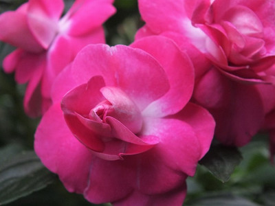 180523california_rose_fiesta2